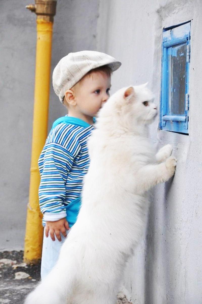 Белый кот смотрит в окно