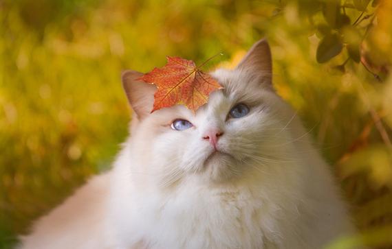 Кот с листочком