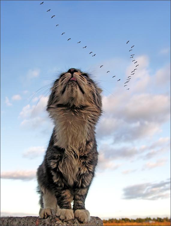 Кошкины мечты