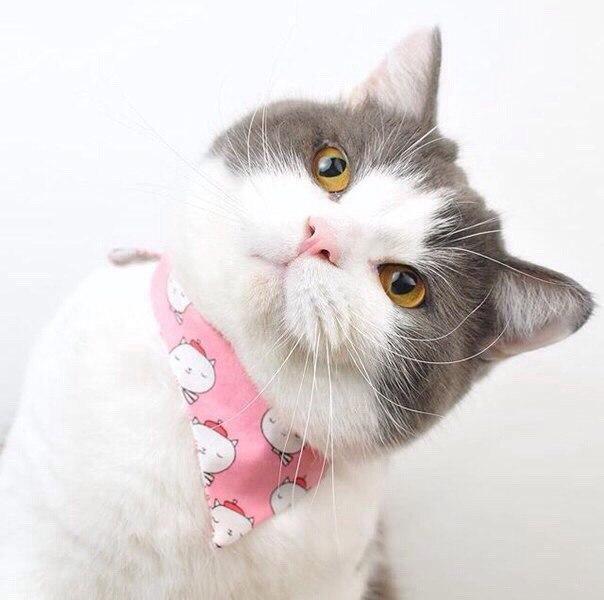 Милый серо-белый кот
