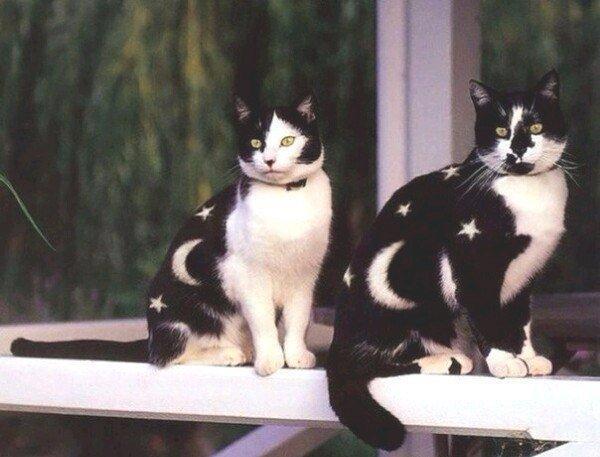 2 необычных кота