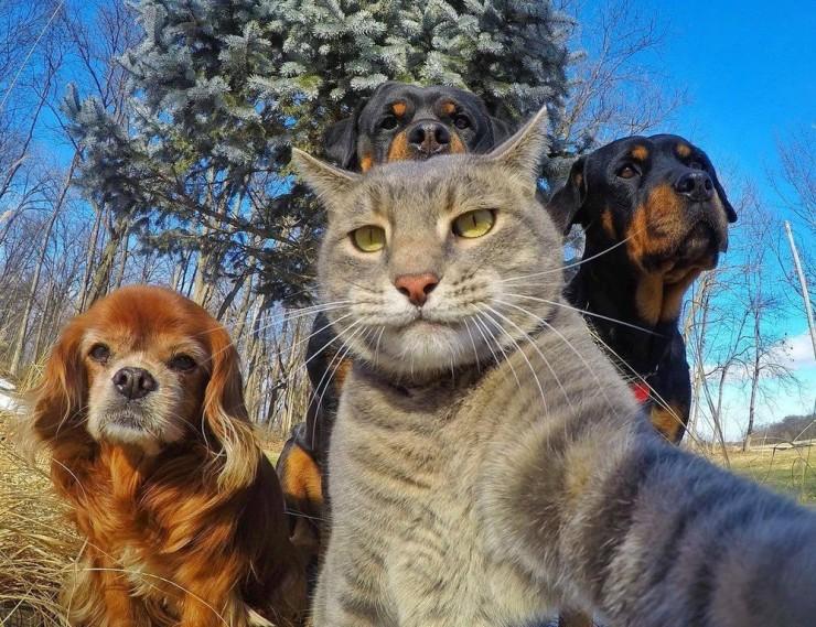 Сели с котом
