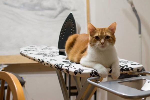 Рыжий кот на гладильной доске