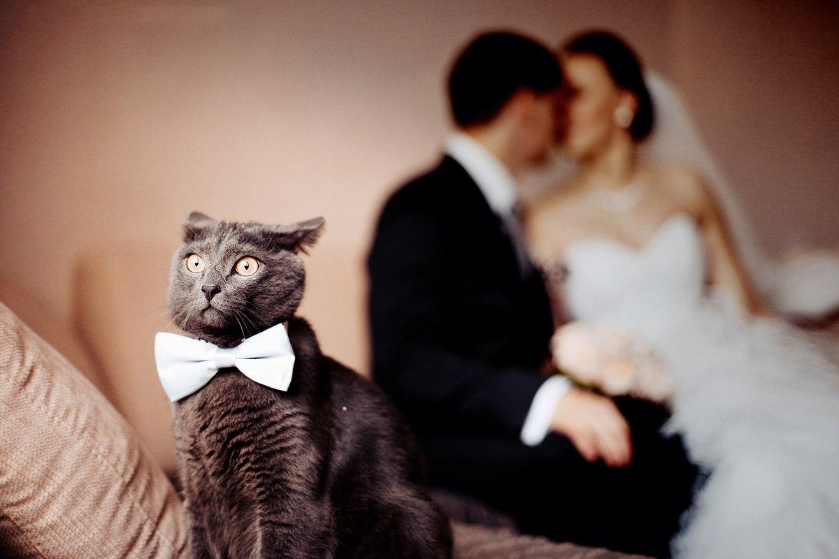 Когда осознал, что твоя мамуленька нашла себе другого человекоподобного кота