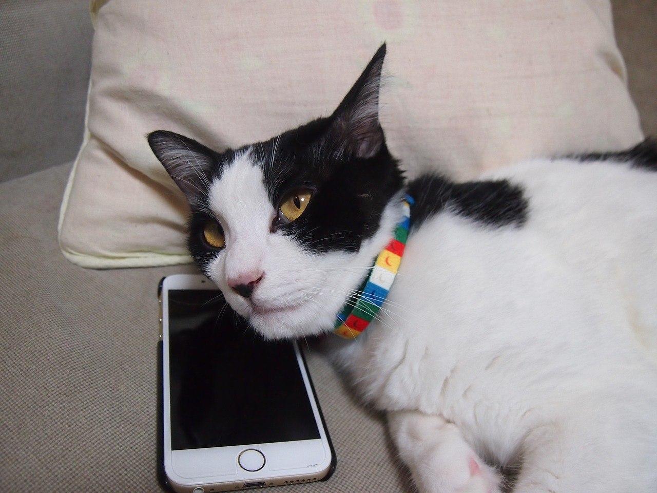Кот спит на телефоне