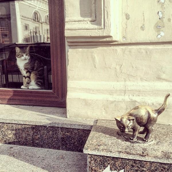 Питерский кот смотрит в окно
