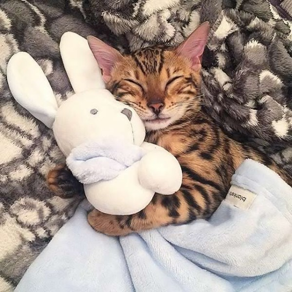 Сверхмилота кот фото