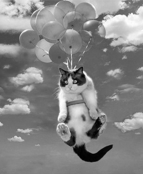 Коты на шариках и с шариками. подборка